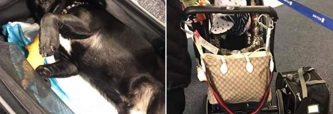 Cucciolo di 10 mesi muore nella cappelliera dell 39 aereo for Cane nella cabina dell aereo