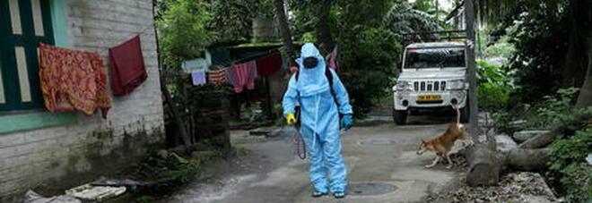 """Non solo covid, il """"fungo nero"""" spaventa l'India: 4.200 morti. Basta essere toccati per essere infettati"""