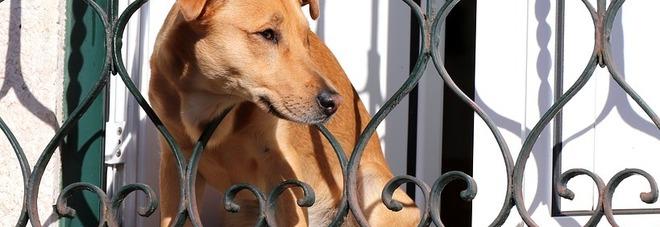 Vietato lasciare i cani chiusi sui balconi, il Comune approva le multe fino a 500 euro