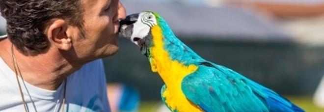 Ostia choc: il pappagallo di Enzo Salvi preso a sassate, lui aggredito