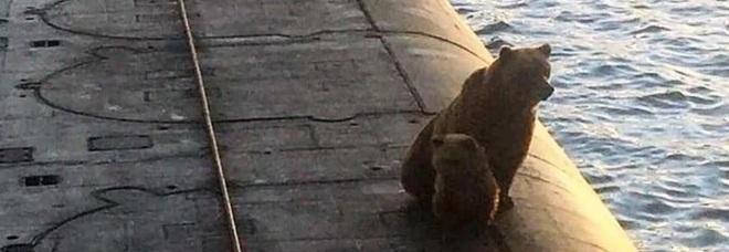 Mamma orsa e il suo cucciolo in cerca di cibo salgono su un sottomarino russo: uccisi senza pietà Video