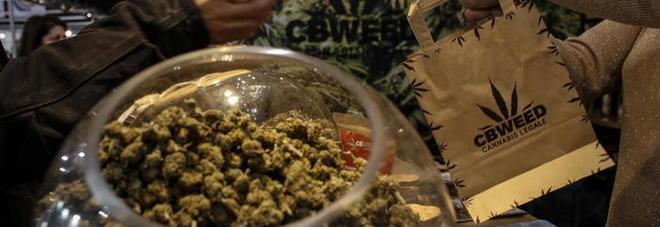 La cannabis a tavola, pubblicato il decreto sui limiti di Thc: arrivano biscotti, taralli e olio