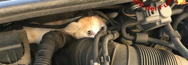 Gattino incastrato nel motore dell'Audi A3, liberato dai pompieri-meccanici Foto