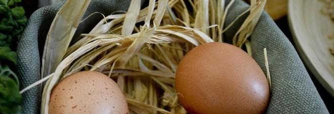 Compra le uova al supermercato e le cova, dopo un mese nascono tre anatroccoli