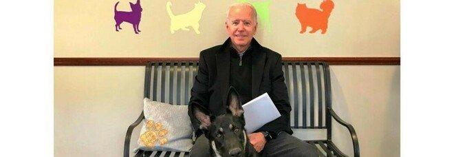Joe Biden e i suoi cani Major e Champ: per la prima volta un trovatello vivrà alla Casa Bianca