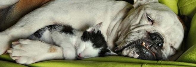 Dolce Dormire Ecco Cosa Sognano Cani E Gatti