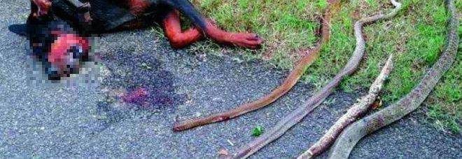 Difende la famiglia da 4 serpenti cane eroe muore per il for Veleno per serpenti