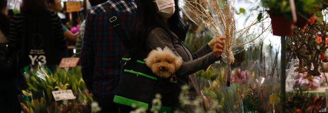 Coronavirus, la Cina ha vietato il commercio di animali selvatici