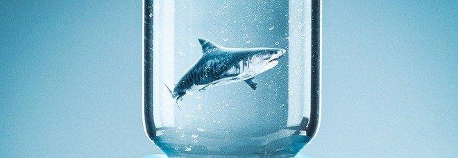 Vaccino Covid, per produrlo minacciati 500.000 squali. «Utilizzato olio presente nel fegato»