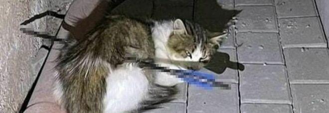 Gatto trafitto e ucciso da una freccia. Ira associazioni: «Secondo caso in pochi mesi»