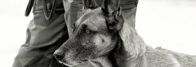 «Cani soldato abbandonati nelle gabbie in Afghanistan»: gli animalisti accusano Biden. La risposta del Pentagono