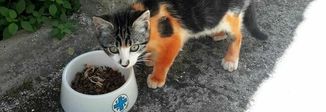 Gatto randagio verniciato di rosso, scatta la denuncia dell'Enpa: «È un reato»