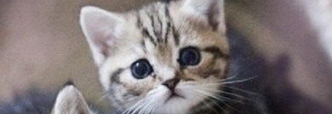 Uccide 3 gattini a badilate denunciato da donna che for I gattini piccoli