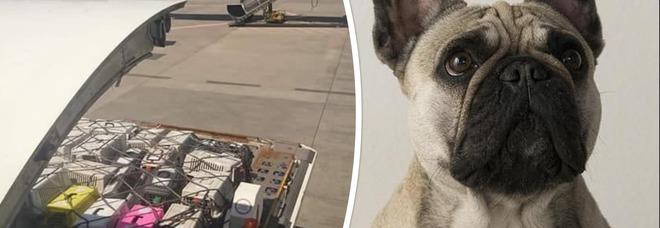 Scoperta choc nella stiva dell'aereo, trovati morti 38 cuccioli: la verità sull'ultimo viaggio verso il Canada e le foto denuncia