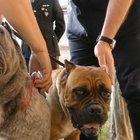 """Orecchie e code tagliate ai cani, 40 denunciati nell'operazione """"Crudelia De Mon"""""""