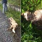 Spagna, picchia e spara al suo cane trascinandolo in strada: «Sono cacciatore, sparo a chi c...o mi pare»