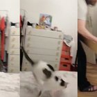 """Questo gatto non ne vuole sapere di uscire dalla """"sua"""" scatola"""