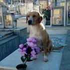 """Roby, avvelenato il cane randagio """"custode"""" del cimitero. Ecco il murales: «Non dava fastidio a nessuno»"""