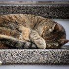 Accoltella 16 gatti uccidendone 9: 5 anni di reclusione al Killer dei felini