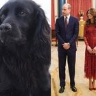 William e Kate, morto il cane Lupo: «Ha conquistato il nostro cuore per 9 anni, ci mancherà tantissimo»