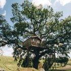 La casa sull'albero a Viterbo: qui ti risveglierai con il profumo di lavanda