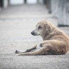 Potenza, cane legato al furgone e trascinato per le strade del paese fino a farlo morire