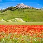 Castelluccio di Norcia, periodo della fioritura: quando andare