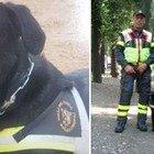 Morto Tommy, il cane eroe dei vigili del fuoco che salvò le vittime del terremoto dell'Aquila