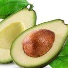 La Puglia come il Messico: spuntano gli avocado