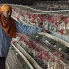 Influenza aviaria, in Cina ancora un'infezione
