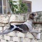Non avete mai visto un cane così curioso