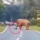 Vuole fare il selfie con l'elefante, turista schiacciato e ucciso Video