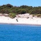 Uomo trovato morto nelle acque della Sardegna: l'appello per aiutare a identificarlo