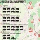 """Roma invasa dai cinghiali: da Aurelio alla Cassia, ecco la mappa della paura. I residenti: """"Abbiamo paura, troppi rifiuti in strada. E nessuno interviene"""""""