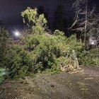 Albero caduto su via della Camilluccia. (Foto Gabrielli/Ag.Toiati)