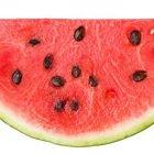 Mangiare i semi dell'anguria fa male? Ecco cosa succede se li mastichiamo
