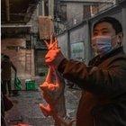 Gli scienziati: «Da Cina e Oms risposte poco credibili»