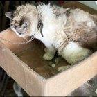 Pordenone, morta la gattina Nina, ha vissuto incatenata per anni in una scatola. Denunciato il proprietario