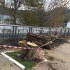Maltempo a Nettuno, Anzio e Castelli: frane, allagamenti, strage di alberi
