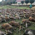 Massacrati 540 cervi e cinghiali in una zona di caccia
