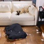 Benedetta Rossi sgrida il suo cagnolino