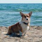 Cani banditi sulla spiaggia preferita dalla famiglia reale per salvaguardare gli uccelli