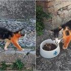 Gatto verniciato di rosso, la denuncia degli animalisti a Terni