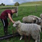 Il 13enne diventato imprenditore grazie all'allevamento di pecore: «Ho realizzato il mio sogno con determinazione»