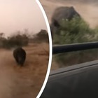 Safari thrilling, rinoceronte furioso attacca la jeep dei turisti VIDEO CHOC