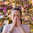 Vaccino Covid e allergia ai pollini: le indicazioni dell'immunologo