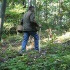 Nettuno, 57enne di Velletri muore dopo la puntura di un insetto: era andato a funghi nel bosco dell'Armellino