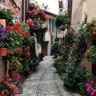 Spello, la città dei fiori diventa ancora più bella in estate: ecco il motivo