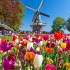 Il parco primaverile più bello del mondo: guarda i meravigliosi tappetti di tulipani