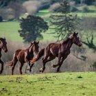 A cavallo in Tuscia, un territorio da scoprire a passo lento